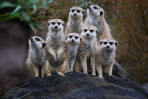 How-to-find-customers-for-your-business-confetti-design-meerkats-looking-cute-on-a-hill